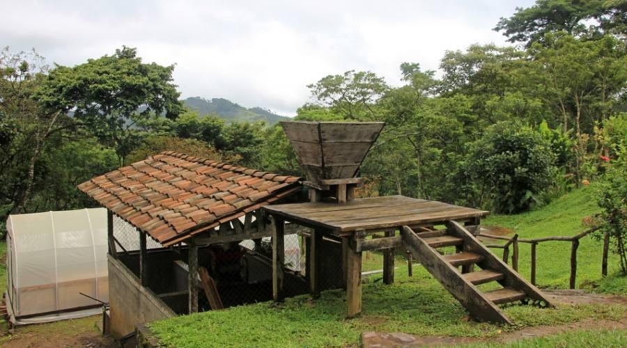 Azienda che coltiva caffè
