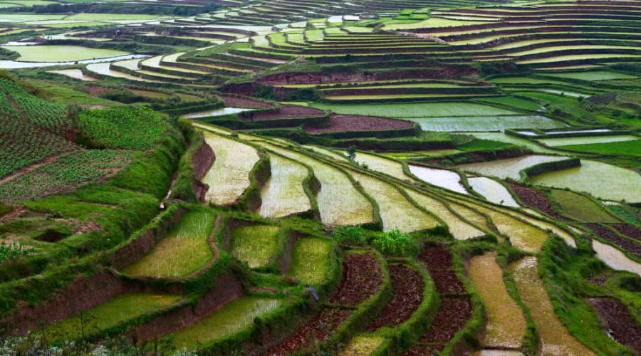 Antsirabe - colline coltivate a riso