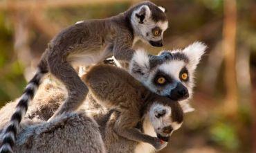 Tour di gruppo nel cuore del Gondwana