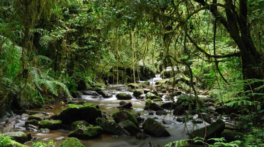 Parco Ranomafana