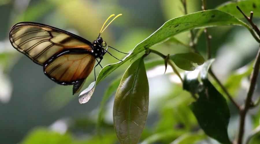Farfalla nella foresta di Selva Negra