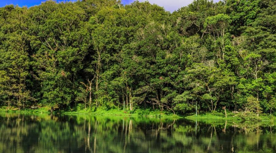 Foresta a Selva Negra