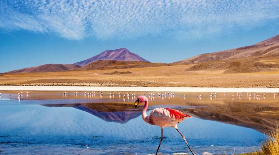 Laguna colorada con fenicottero