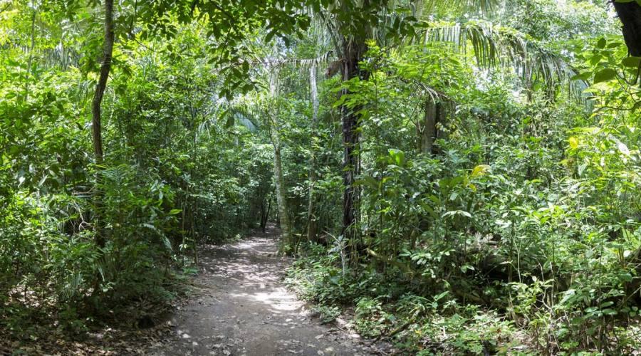 Un sentiero nella foresta