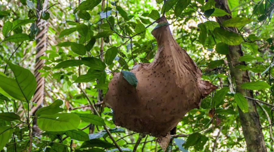 Un nido di formiche