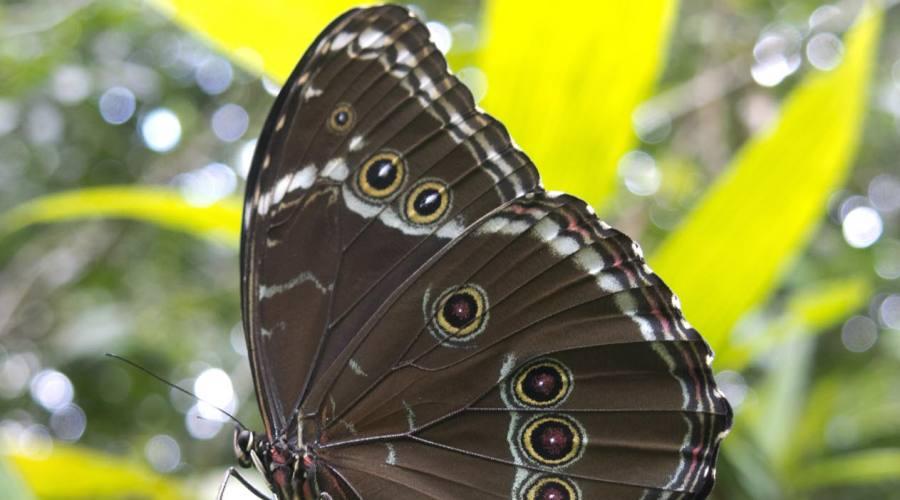 Una bella farfalla