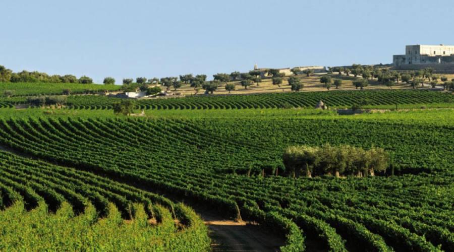 Masseria Wine Resort con Giardino Vigneto