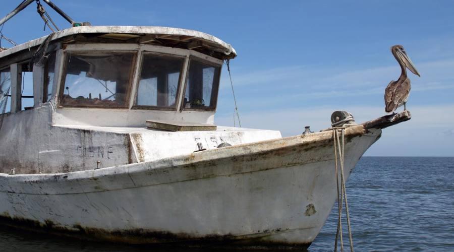 Pellicano in posa sul Rio Dulce