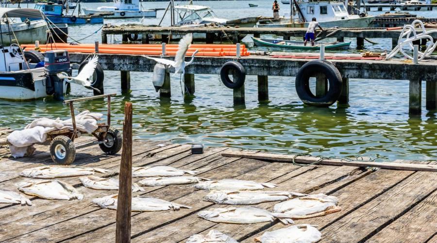 Pesce ad essicare sul Rio Dulce