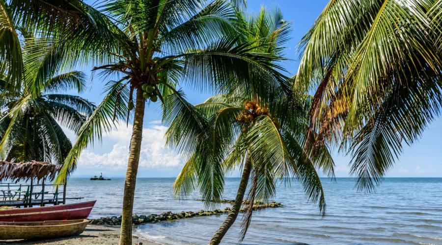 Livingston, spiaggia caraibica