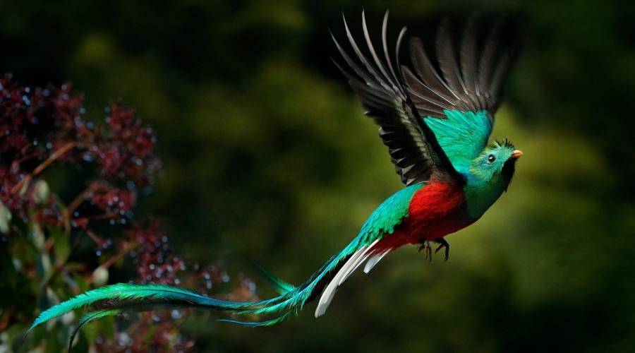 Il magico quetzal, uccello sacro ai Maya