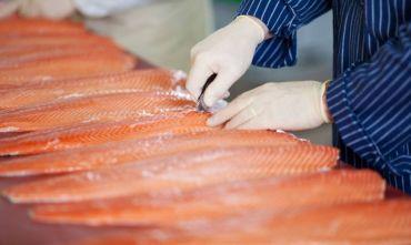 Tour di gruppo: Il salmone di alta qualità delle Isole Faroe
