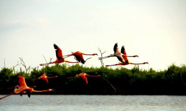Yucatan & Chiapas in Libertà