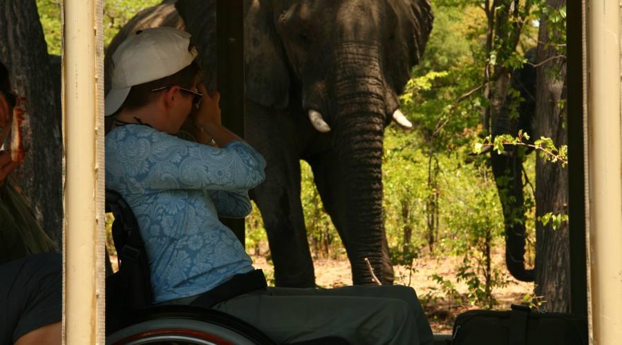 Avvistamento elefante