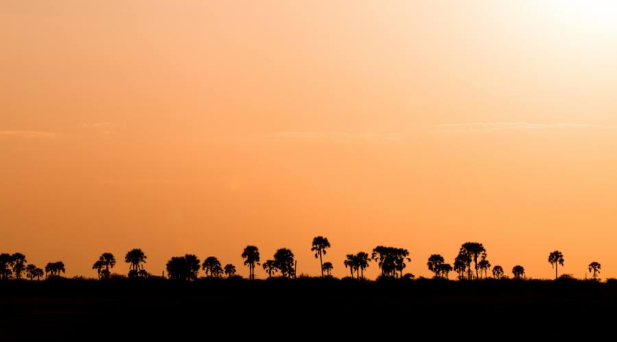 Alberi al tramonto