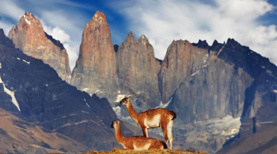 Guanaco, Torri del Paines