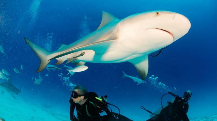 Escursioni: Snorkeling & sub