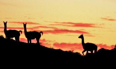 5 giorni in Patagonia e alle Torri del Paines