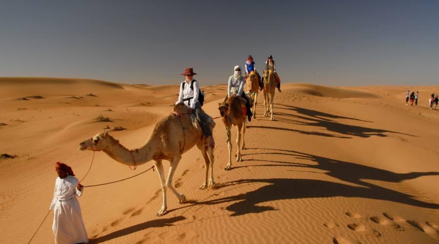 Camelli nel Wahiba Sands