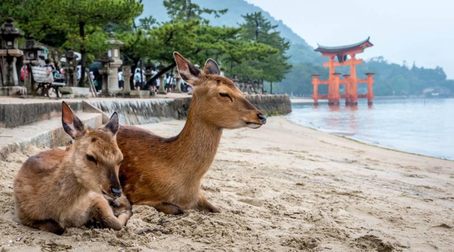 L'isola di Miyajima