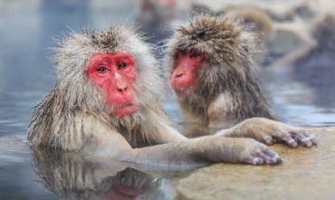 Castelli, terme e scimmie delle nevi