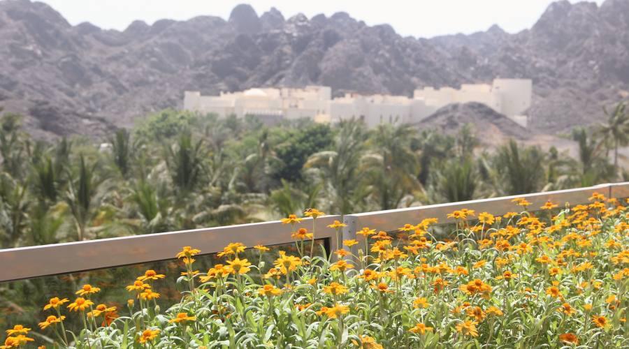 Jabal Akdar -fiori sulle montagne