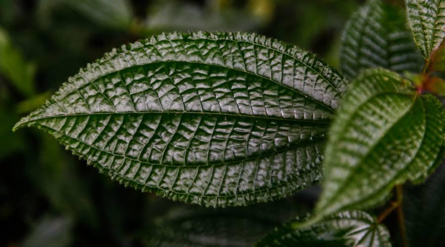 Area botanica
