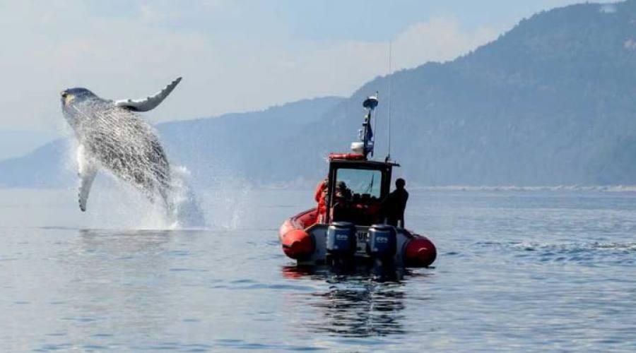 Escursione avvistamento Balene