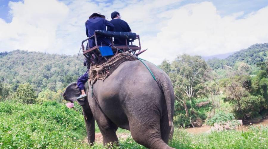 Elefanti Éléphants d'Asie