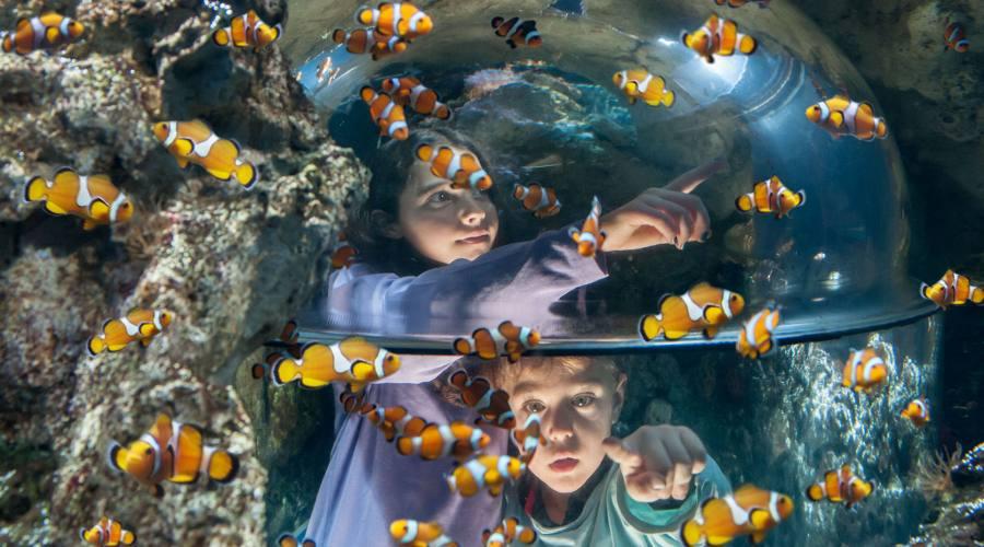 Sea life - I pesci pagliaccio