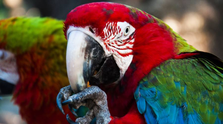 Scopri favolosi uccelli colorati