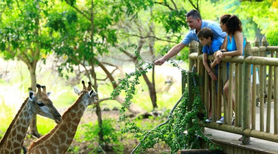 Potrai nutrire le giraffe