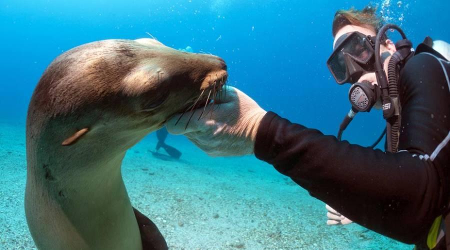 Amicizie subacque