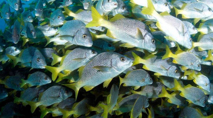 Un muro... di pesci!