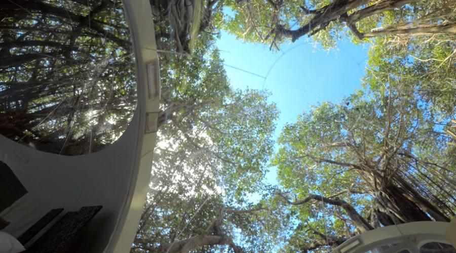 Prospettiva dall'interno del Bubble Lodge Albero Banyan