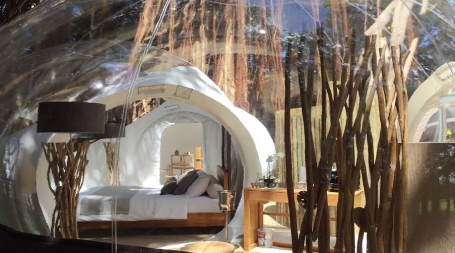 Bubble Lodge Albero Banyan