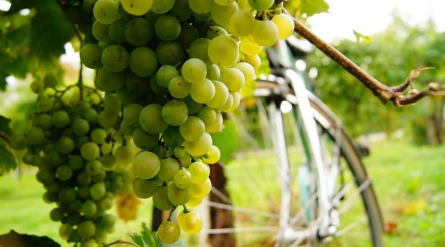 Particolare uva