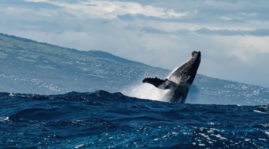 Reunion: le balene, uno spettacolo indimenticabile