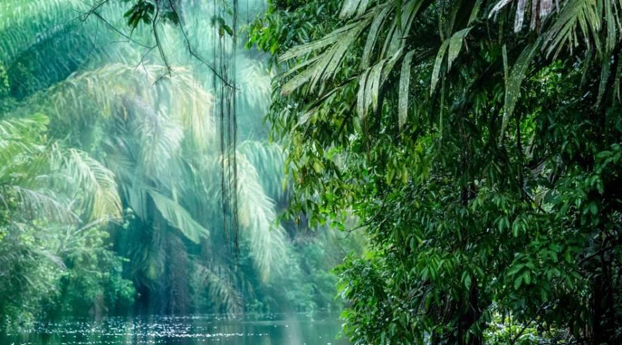 La giungla del Parco Tortuguero