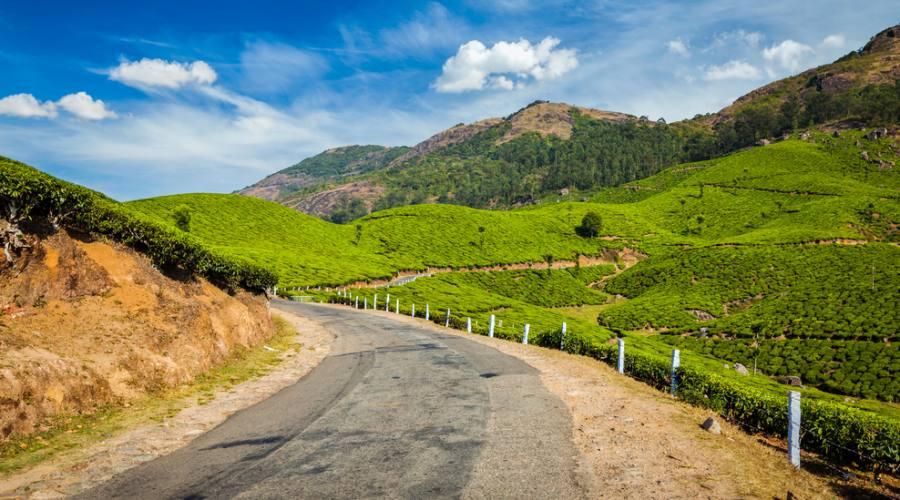Strada tra le piantagioni di tè verde del Kerala
