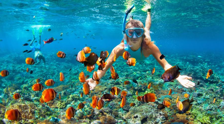 Immersione in profondità sott'acqua con pesci tropicali