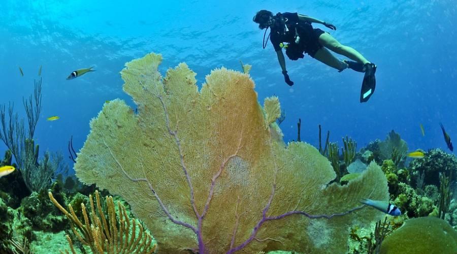 Attività diving