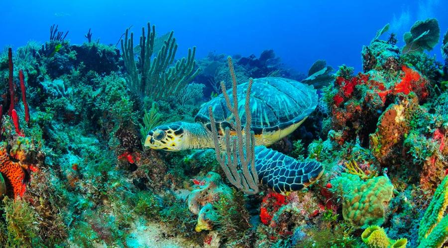5° giorno: arrivo a Cancún o Riviera Maya