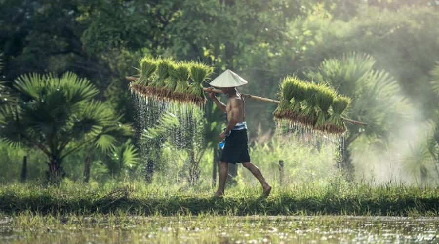 la campagna birmana