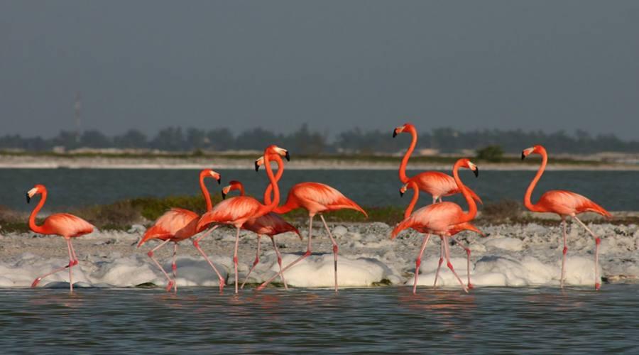 4° giorno: Flamingos Rosados a Celestún