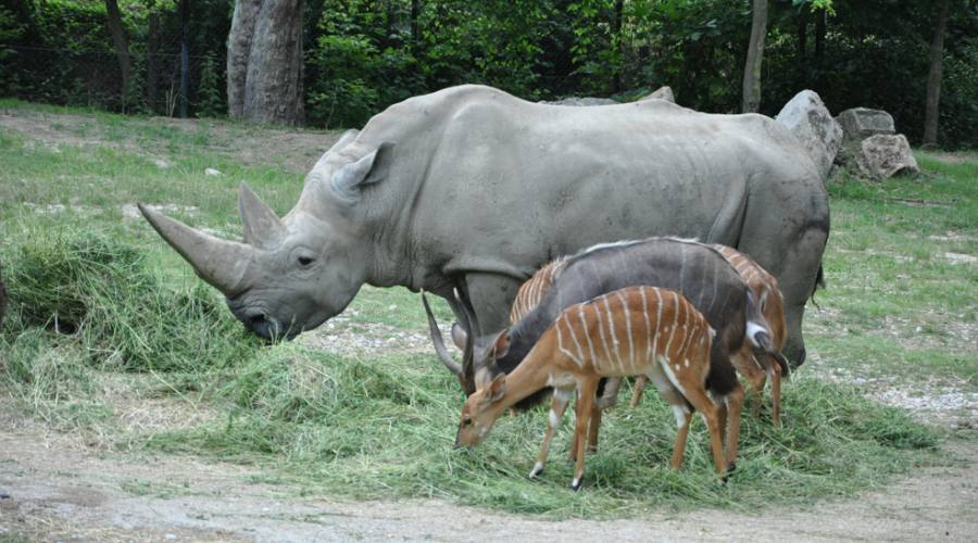 Animali al Parco Safari