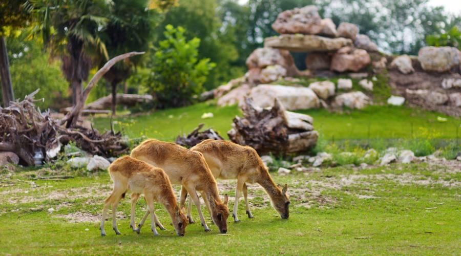 Animali al Parco Natura Viva