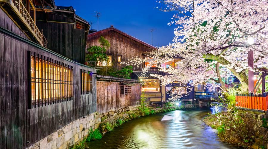Il distretto di Gion a Kyoto, in fiore