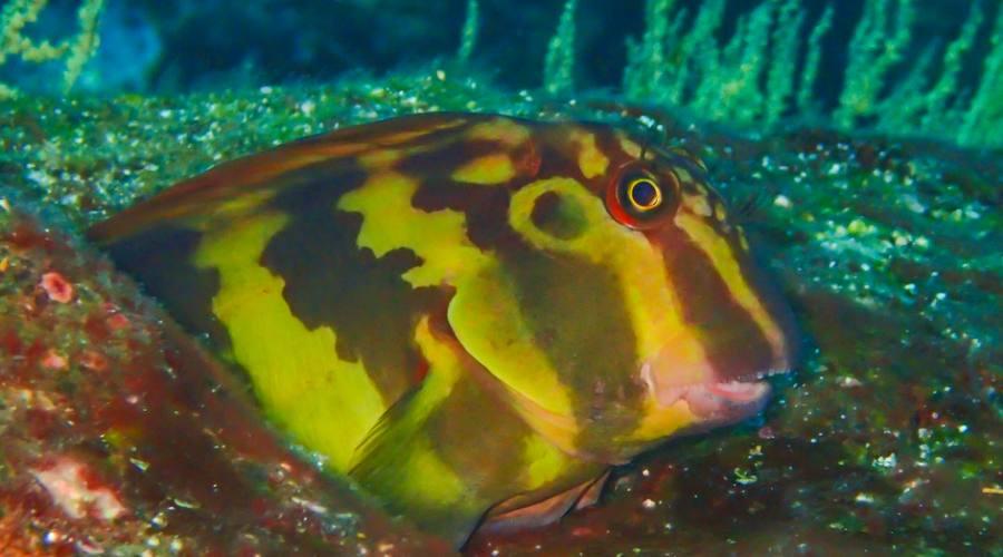 Colori sott'acqua