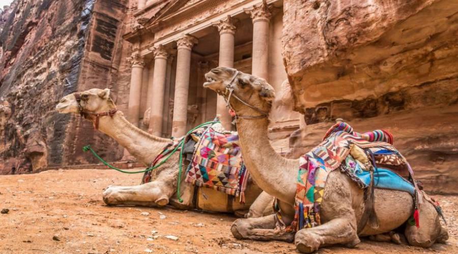 cammelli beduini a Petra